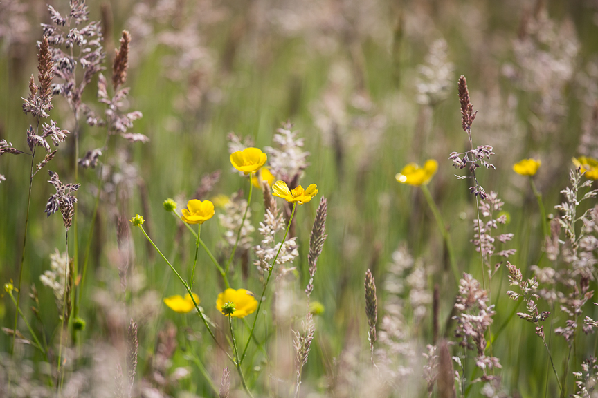 Hospice of St Francis Gardens Wildflowers