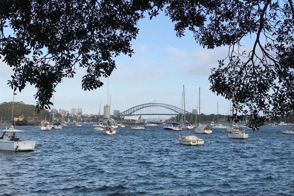 Sydney Harbour Framed by trees